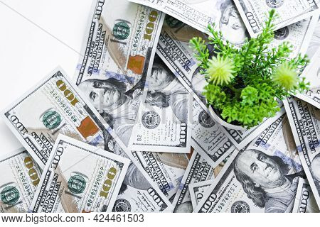 100 Dollars Bills, The Flower Will Sprout. Future Us Federal Reserve Inflation. Concern