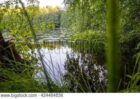 Forest Lake. Lake With Water Lilies. Finnish Nature. High Quality Photo