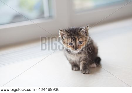 A Small Frightened Tricolor Kitten Sits On The Windowsill.