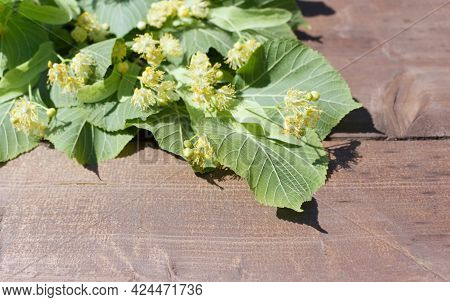 View On Linden Tilia Cordata Flowers And Leaves Being Dried On Wooden Board, To Be Used As Herbal Te