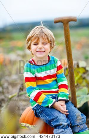 Adorable Little Kid Boy Picking Pumpkins On Halloween Pumpkin Patch. Child Playing In Field Of Squas