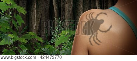 Tick Insect And Parasite Danger In The Forest As A Scary Illness Carrier Bug Mite As A Risk For Lyme