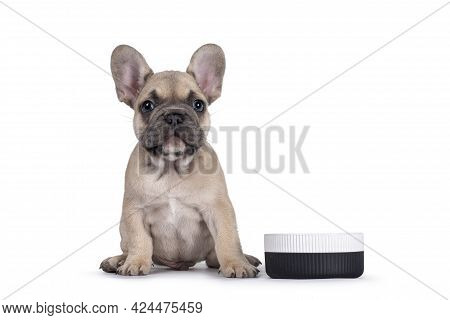 Adorable Fawn French Bulldog Puppy, Sitting Beside Ceramic Food Bowl. Isolated On A White Background