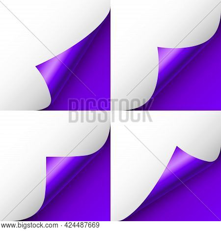 Set Of Violet Paper Curls. Curled Page Corner With Shadow. Blank Sheet Of Paper. Colorful Shiny Foil