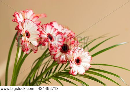 Close-up Of A Bouquet Of Red Gerberas In A Vase On A Beige Background. Photo Is Ideal For Congratula