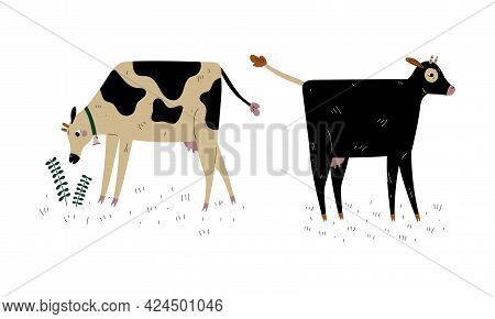 Milk Cow With Udder Grazing On Pasture As Dairy Cattle Breeding And Farming Vector Set