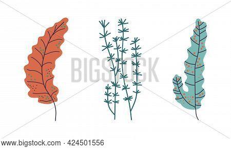 Seaweeds Or Plants And Aquatic Marine Algae Growing On The Ocean Bottom Vector Set