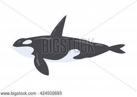 Orca Killer Whale Marine Mammal Fish Animal Cartoon Vector Illustration