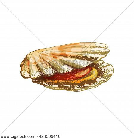 Shell Scallop. Vintage Hatching Color Illustration Isolated On White Background. Hand Drawn Design I