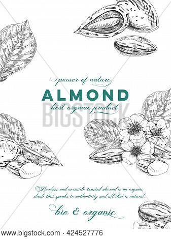Almond Composition Poster, Retro Hand Drawn Vector Illustration.
