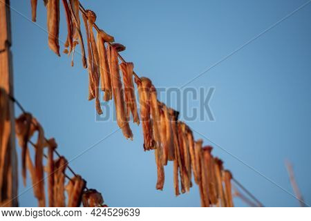 Typical Salty Dried Fish Peix Sec In The Balearic Islands Of The Mediterranean In Es Calo, Formenter