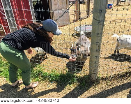 Spruce Grove, Alberta, Canada - June 12th, 2021: A Mother And Young Daughter Feeding Farm Animals Th