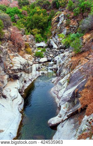 Picturesque rocky stream. Sequoia Park in California, USA. Travel to America. The natural range of the genus is the Pacific coast of North America.