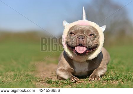 Funny Lilac French Bulldog Dog With Fluffy Unicorn Headband And Tongue Sticking Out Lying On Grass G