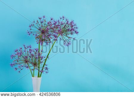 Persian onion or Star of Persia flowers in a vase with copy space on blue background