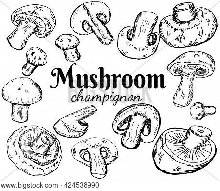 Champignons Set. Vector Illustration Of Mushrooms Champignons On White Background. Hand Drawn Style.
