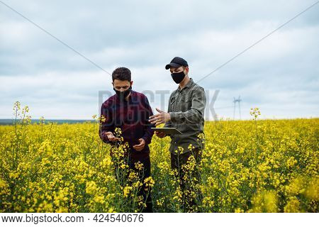 Two Young Farmers In Masks In The Middle Of A Rapeseed Field Check The Crop And Enter The Data On A