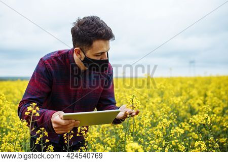 An Agronomist In Black Mask With A Tablet In His Hands Stands In A Rapeseed Field And Checks Bloomin