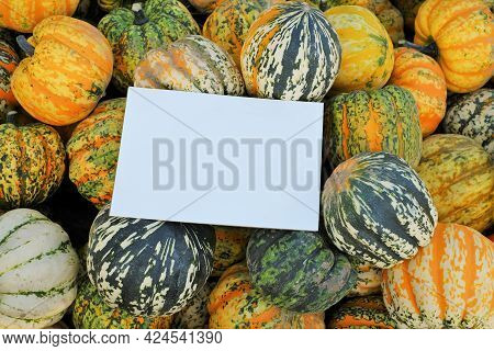 Pumpkin Harvest.pumpkin Mockup. Striped Pumpkin Background And White Blank Plate. Autumn Pumpkin Abu