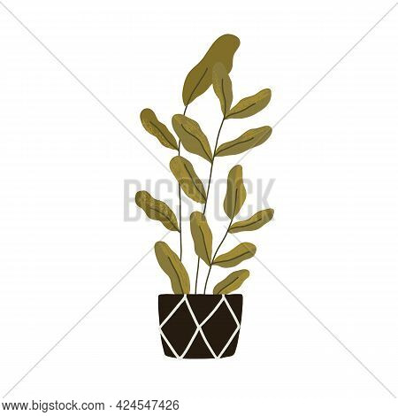 Green Potted Interior Plant For Home Decoration. Big High Foliage Houseplant In Planter. Tall Ficus