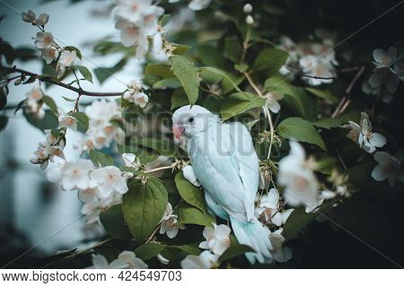 Blue Rose-ringed Or Ring-necked Parakeet On The Branch In Summer Garden
