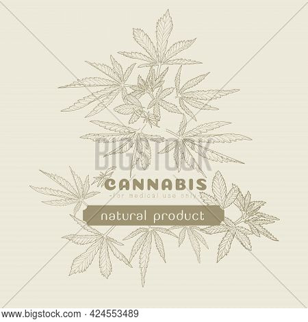 Hand-drawn Hemp. Sketch Of Cannabis Leaves And Marijuana Bud Set Of Vector Illustrations. A Bunch Of