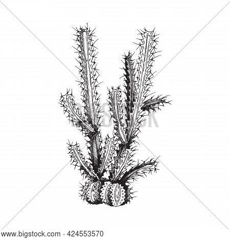 Desert Cactus, Wild Prickly Succulent Plant A Vector Illustration.