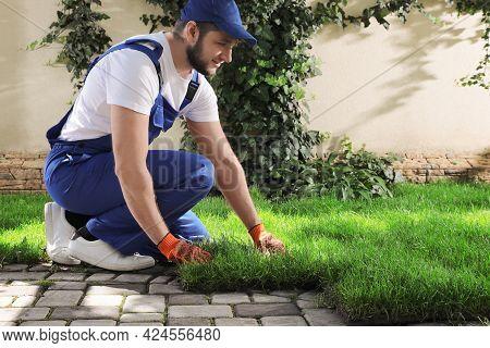 Gardener In Uniform Laying Grass Sod On Backyard