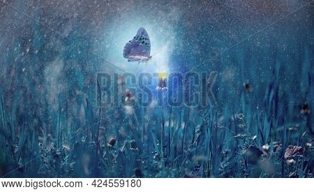 Blooming Yellow Dandelion At Night In Dense Grass And Flying Butterfly. Mystical Background With Glo