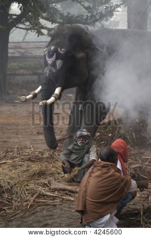 Elephant And Mahouts Around A Camp Fire