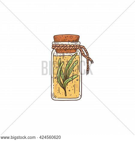 Bottle With Fresh Rosemary Sprig In Oil Engraving Vector Illustration Isolated.