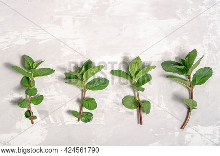 Flat Lay With Fresh Sprigs Of Mint On A Concrete Background. High Quality Photo