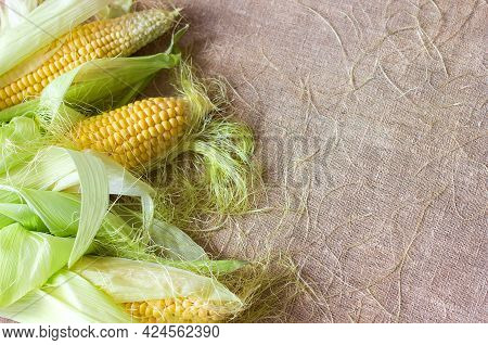 Corn On The Cob With Leaves, Whole Ears Lie On A Canvas Background, A Delicious And Healthy Seasonal