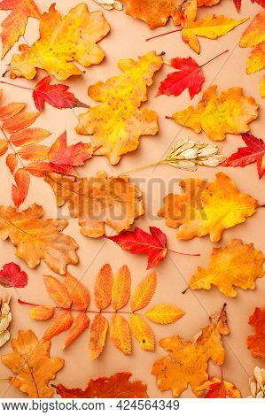 Autumn Composition. Pattern From Of Autumn Leaves On Beige Neutral Background. Flat Lay, Top View, S