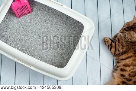 Cat Litter Tray With Pink Scoop And Bengal Cat