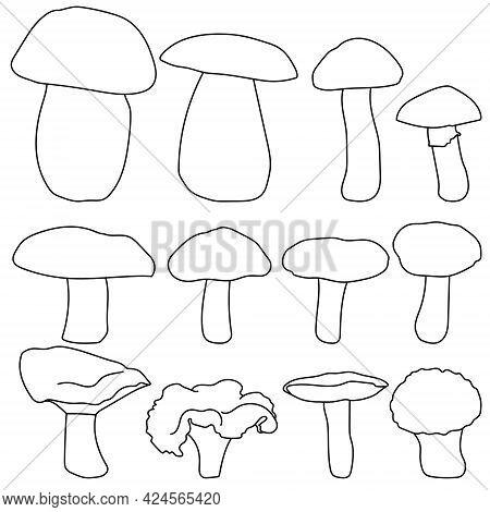 Edible Mushrooms Set, Contour Cap Mushrooms Of Various Shapes And Sizes Vector Illustration