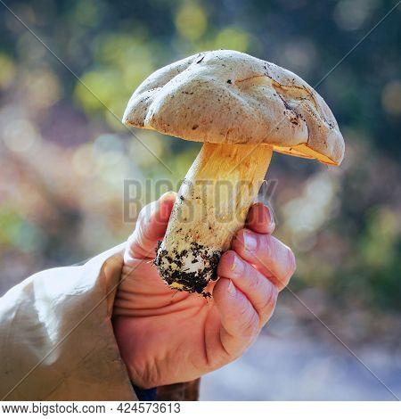 Big Mushroom In Hand On Blurred Background