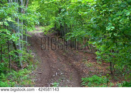 Off road track in the forest