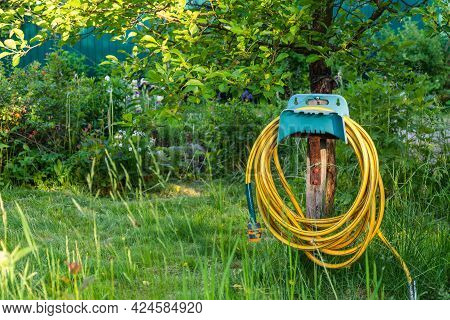 Yellow Rubber Irrigation Hose Coiled In A Bay Hanging In A Green Garden, A Bay Of Irrigation Hose On
