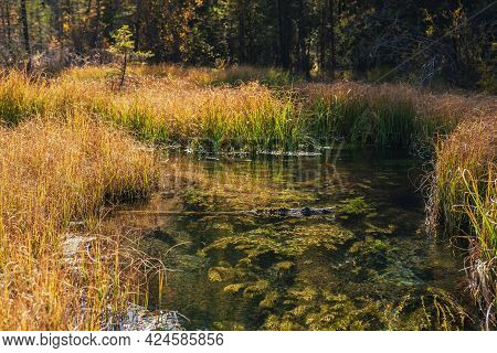 Scenic Landscape With Clear Water Of Mountain Brook With Green Plants And Moss Among Grasses In Autu