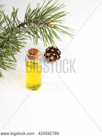Natural Essential Pine Oil In Small Glass Bottle, Pine Branch And Cone On White Background. Vertical