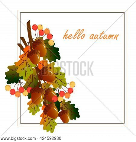 Card With A Bouquet Of Acorns, Autumn Leaves And Berries. Autumn Time. Vector Illustration With Fram