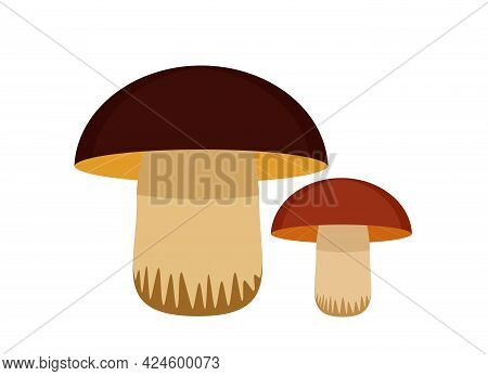 Vector Illustration Of Two Edible Mushrooms With A White Leg And A Brown Cap.