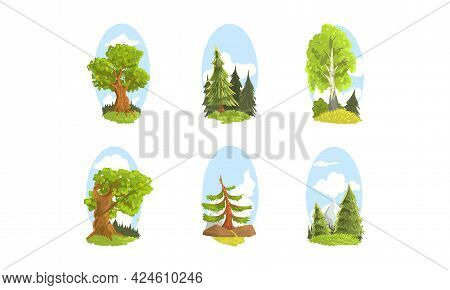 Forest Trees Set, Evergreen Fir And Deciduous Trees Cartoon Vector Illustration