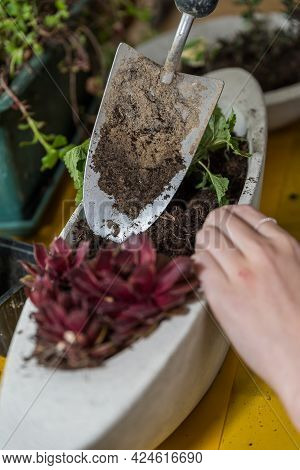 Concrete Flower Pot - Florist Plants Concrete Flower Bowl For Outdoors