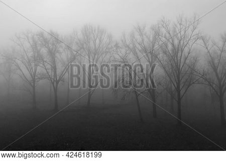 Gray Foggy Morning In The City Park Of Szeged In Hungary.