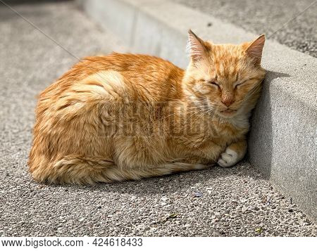 Cute Ginger Cat Sleeping On The Street Near The Curb On The Pavement.