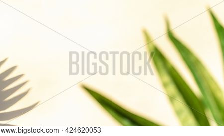 Space Shadow Summer Background. Plant Leaf Shadows On White Wall In Abstract Tropical Sunlight Textu