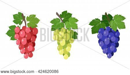 Set Of Different Wine Grapes Icons. Green Grapes, Black And Red Pink Muscatel Grape Branches With Le