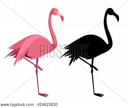 Pink Flamingo. Exotic Tropical Bird. Zoo Animal Collection. Decoration Element. White Background. Is